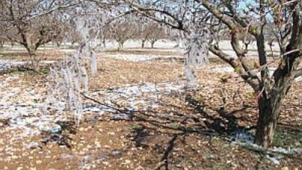 Bölgemizde Meteorolojiden zirai don uyarısı