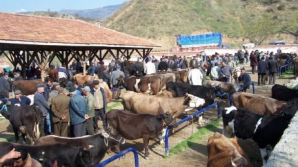 Hastalıklı hayvanlar pazara alınmıyor