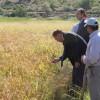 Türköz, pirinç hasadı yapan çiftçileri ziyaret etti