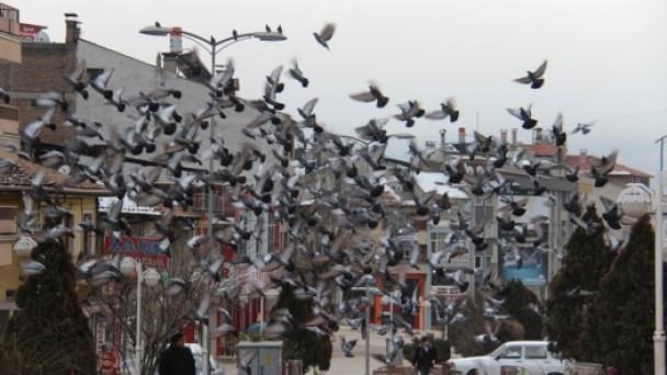 Tosya'da soğuklar kuşları etkiledi