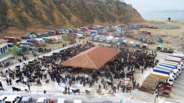 Şap Hastalığı Tehlikesi Geçti; Hayvan Pazarı Açıldı