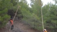 Tosya'da çam kese böceği mücadelesi