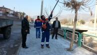 Ağaçlara Kış Bakım Çalışmaları