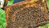 İlçe Tarımda Arıcılarla Toplantı Yapılacak