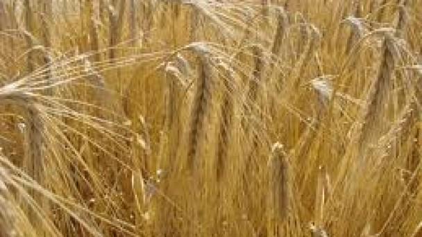 Çiftçilere Yeni Bir Destekleme