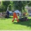 Lacivert bereliler  temizliyor