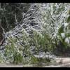 Kestiği ağacın altında kalan bir kişi öldü