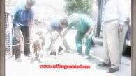 İlçemizde Sokak Hayvanları Kısırlaştırılıyor