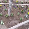 Bunlarda Çiçek Hırsızları