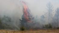 Tosya'da orman yangını Korkuttu