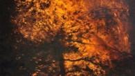 Ortalıca'da Korkunç Yangın