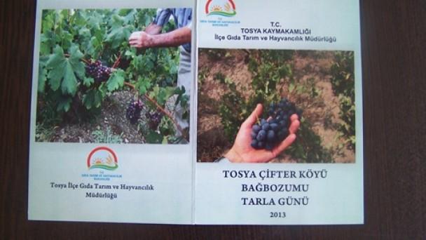 Tosya'da Bağbozumu Çifter'den Başlayacak!