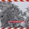 Tosya'da ani bastıran karın temizlik çalışmaları devam ediyor