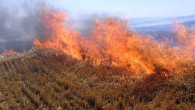 Tosya'da yangın