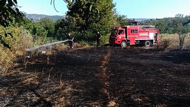 Tosya'da arazi yangını