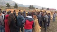 Tosya Ormanlarına Teknik Gezi