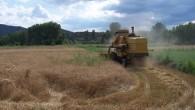 Tosya'da Buğday Hasadı Başladı