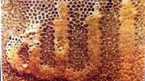 Arıcılar TKDK Desteği İle Büyüyor