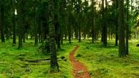Ormancılık Haftası Kutlanacak