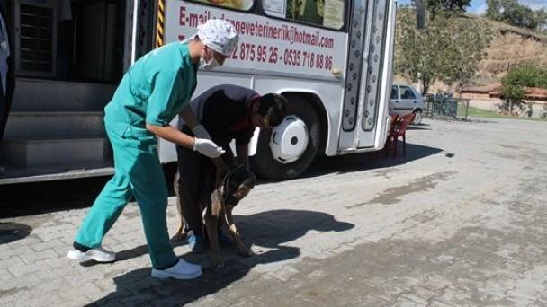 Belediyeden Sokak Hayvanları Açıklaması