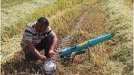 Tosya'da pirinci kurt bombasıyla koruyorlar