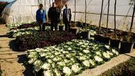 15 bin kök süs bitkisi dikildi