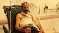 Tosya'da ayı bir kişiyi yaraladı