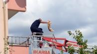 Kediye kurtarma Operasyonu