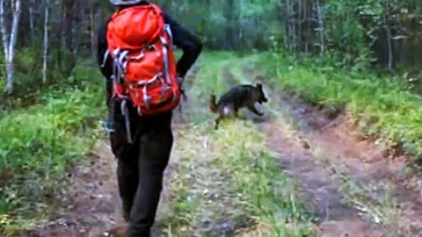 80 Yaşındaki Adam Ormanda Kayboldu