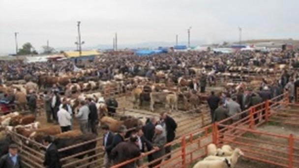 Tosya'dan Sonra Taşköprü'de de Hayvan Pazarı Kapatıldı..!