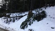 Lodos ağaçları devirdi