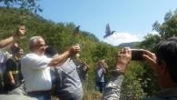 Tosya'da bin 200 kınalı keklik doğaya bırakıldı