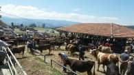Tosya Hayvan Pazarı Cumartesi'ye Kadar Açık