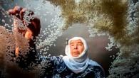 Tosya Pirinci En Güzel Karelerini Seçti
