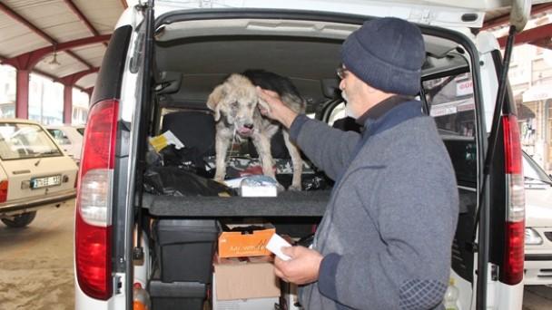 Sokak Köpeğini tedavi için 25 km götürdü