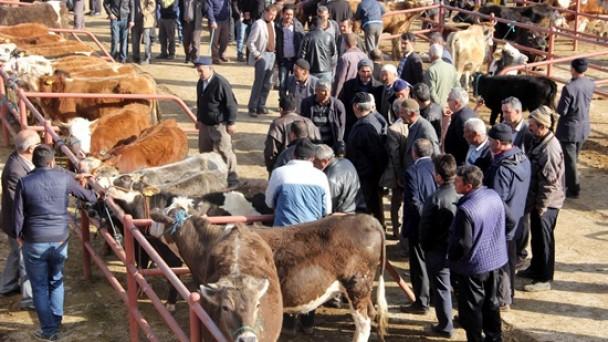 Tosya Hayvan Pazarı Kapandı