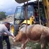Su kuyusuna düşen iki inek kurtarıldı
