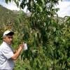 Tosya'da Projeli Meyve Bahçeleri Kontrol Ediliyor