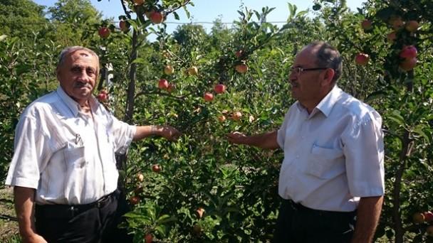 Örnek Elma Bahçesi ile İlgili Bilgi Aldı