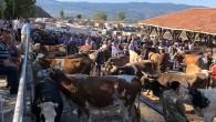 Tosya Hayvan Pazarı Arife Gününe Kadar Açık
