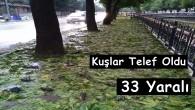 Kastamonu'da dolu yağışı kuşları da telef etti