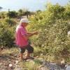 Tatil için geldiği köyünde tatilcilerin bıraktığı çöpleri topluyor