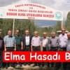 Tosya'da Elma Hasadı Başladı