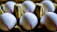 Tavuk yumurtası üretimi Ağustos'ta arttı
