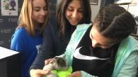 İtfaiye ve öğrencilerden kedi kurtarma operasyonu