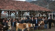 Genç Çiftçilere Hayvanları Dağıtıldı