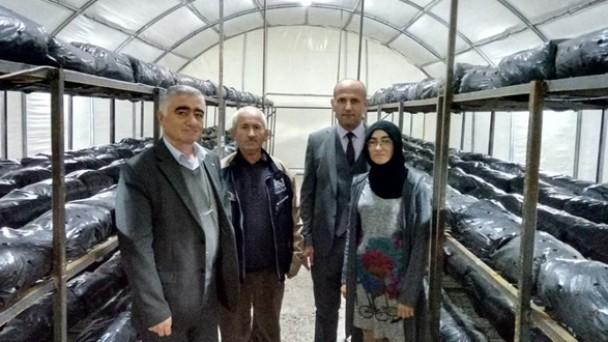 """Tosya'da """"Genç Çiftçi Projesi"""" Kapsamında Mantar Üretimi Yapılıyor"""