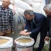 Tosya'da çiftçilere 24 ton çeltik tohumu dağıtıldı