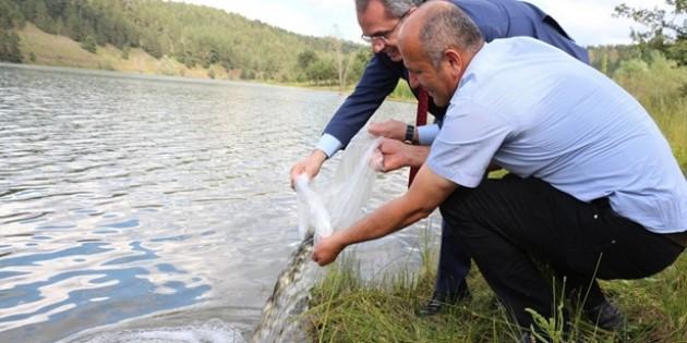Tosya Sekiler Göletine 2bin Sazan bırakıldı