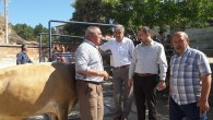 Tosya Belediye Başkanı Volkan Kavaklıgil, hayvan pazarında incelemelerde bulundu